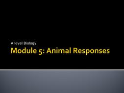 3.-Reflexes-Presentation.ppt