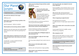One-Planet-Jungle-Teacher-Sheet.docx