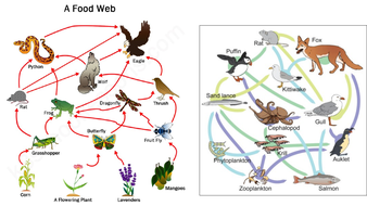 Food-web-images.pptx