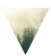 Fog-Blank-bunting.jpg