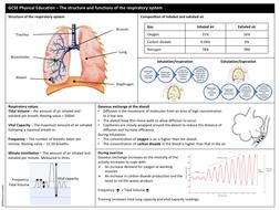 Edexcel GCSE PE - Component 1: Anatomy & Physiology ...