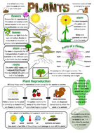 Year 3 Science Poster - Plants