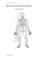 Unlabelled-Skeleton-Diagram.doc