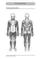 Muscular_system_no_labels.doc