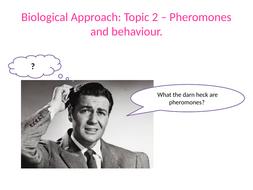 Lesson-6-Pheromones.pptx