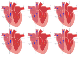 Heart-diagram.pptx