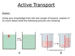 Active-transport.pptx