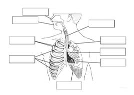 match-up-diagram.docx