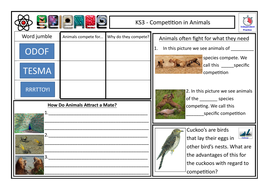 TES-Interdependence---Competition-in-Animals----Pupil-Worksheet.pdf