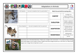 TES-Interdependence---Adaptations-in-Animals----Pupil-Worksheet.pdf