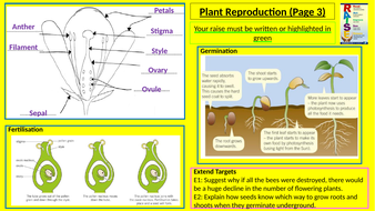 Y8-Homework-RAISE---Plant-reproduction.pptx