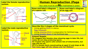 Y7-Homework-RAISE---Human-Reproduction.pptx
