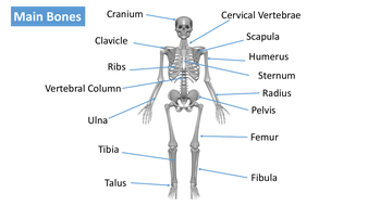 preview-images-structure-of-skeleton-powerpoint-1.pdf