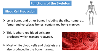 preview-images-structure-of-skeleton-powerpoint-3.pdf