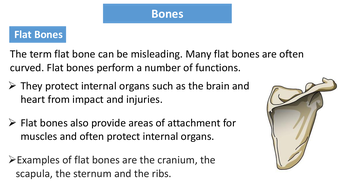 preview-images-structure-of-skeleton-powerpoint-14.pdf