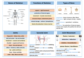 preview3-structure-of-skeleton-revision-mat.pdf