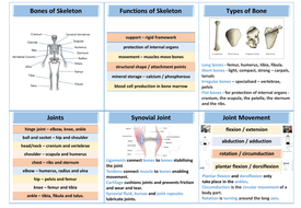 preview-4-structure-of-skeleton-revision-mat.pdf