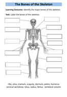preview-the-bones-of-the-skeleton.pdf