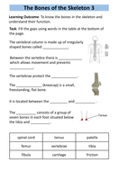 preview-the-bones-of-the-skeleton-3structure-of-skeleton-workbook-5.pdf