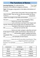 preview-function-of-bones.pdf