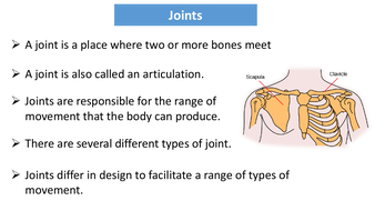 preview-images-structure-of-skeleton-powerpoint-15.pdf