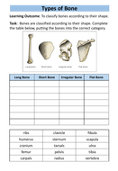 structure-of-skeleton-workbook-6.pdf