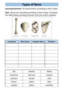 structure-of-skeleton-workbook-6.pdf