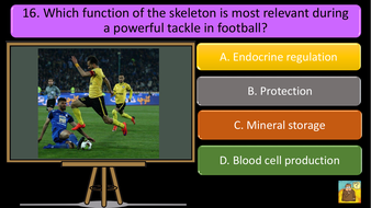 preview-images-structure-of-skeleton-quiz-12.pdf