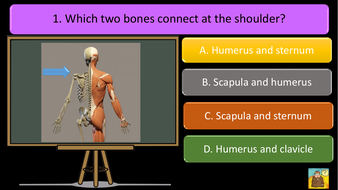 preview-images-structure-of-skeleton-quiz-1.pdf