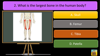 preview-images-structure-of-skeleton-quiz-2.pdf