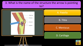 preview-images-structure-of-skeleton-quiz-3.pdf