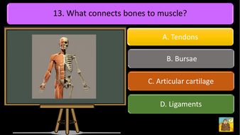preview-images-structure-of-skeleton-quiz-10.pdf