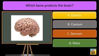 preview-images-structure-of-skeleton-quiz-9.pdf
