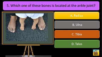 preview-images-structure-of-skeleton-quiz-5.pdf