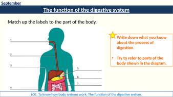 2-digestive-system-function.pptx