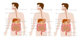 L1-Name-that-organ.docx