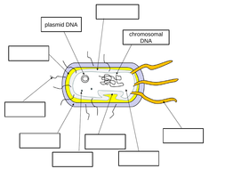 Bacterial-cell-labelling-task.pptx