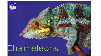 Chameleons.pptx