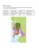 Mumbai's-Structure-(1).pdf