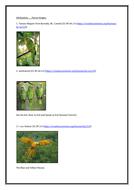 ParrotImages(attributions)..docx