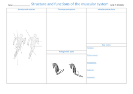 2.-Structure-and-function-of-the-muscular-system.docx
