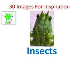 30-Images-For-Inspiration-Insects.pdf
