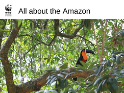 About-the-Amazon.ppt