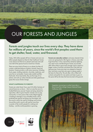 primary_ourforests_jungles.pdf