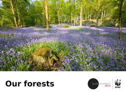 Our_Forests_Slides.pptx