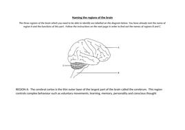 The brain (AQA GCSE Biology) | Teaching Resources