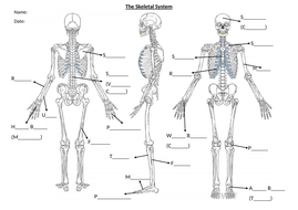 BTEC Unit 1 Anatomy and Physiology Skeletal Handout by