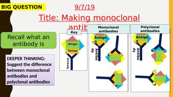 AQA new specification-Making monoclonal antibodies-B6.5