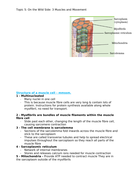 Edexcel A Level Biology A - Topic 7 - Muscles and Movement (2/3)