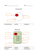 cell-structure.docx